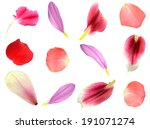 Stock photo set of assorted flower petals rose chrysanthemum and lily carnation magnolia 191071274