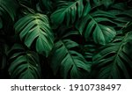 High Detail Tropical Plants...