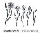 cornflowers set. hand drawn... | Shutterstock .eps vector #1910840311