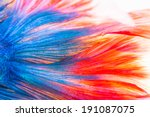 texture of tail siamese... | Shutterstock . vector #191087075