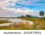 Edge Of Brackish Pond Or Lake ...
