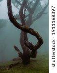 Beautiful Tree With Fog. Fog In ...