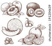 vector set of engraving... | Shutterstock . vector #191204639