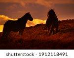 Wild Horses In The Brecon...