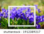 Creative Layout Made Of Violet...