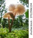 Two Fragile Mushrooms Growing...