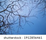 Branch Tree And Leafless On...