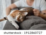 Small Cat Of White  Ginger And...