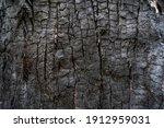 Burned Wood Texture. Black...