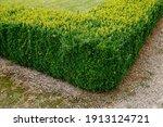 corner of green trimmed bush...   Shutterstock . vector #1913124721
