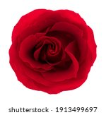 Red Rose. Deep Focus. No Dust....