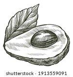 nutritious avocado pear exotic... | Shutterstock .eps vector #1913559091