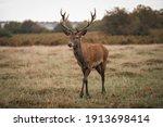 Group Of Deer In Richmond Park. ...