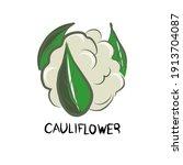 lettuce  cabbage  broccoli ...   Shutterstock .eps vector #1913704087