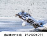 An Uprooted Tree Near The...