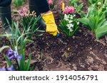 Farmer Loosening Soil With Hand ...