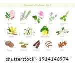 essential oils plant set....   Shutterstock .eps vector #1914146974