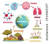 biological hierarchy set of... | Shutterstock .eps vector #1914365197