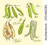 vector illustration of legumes... | Shutterstock .eps vector #191460281
