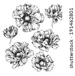 set of hand drawing poppy... | Shutterstock .eps vector #191462801