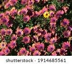 Be Unique. Single Yellow Flower ...