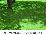 Forest  Shaded Glade Background ...