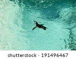 penguin in an aquarium | Shutterstock . vector #191496467