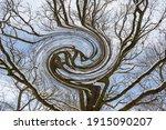 Digital Illustration Trees And...