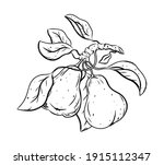 ink sketch of two pears with...   Shutterstock .eps vector #1915112347