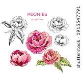botanical design  flower peony  ...   Shutterstock .eps vector #1915547791