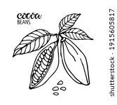 vector handwritten cocoa beans... | Shutterstock .eps vector #1915605817