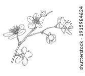 hand drawn branch of sakura... | Shutterstock .eps vector #1915984624