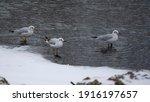 In A Snowy Day Three 3  Seagull ...