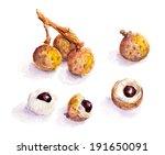 longan fruit   watercolor... | Shutterstock . vector #191650091