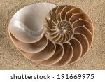 Brown Nautilus Shell This Cut...