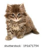Stock photo beautiful persian little kitten isolated on white background 191671754