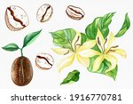 watercolor coffee beans and...   Shutterstock . vector #1916770781