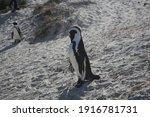 Introvert Penguin   Boulders...
