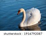 Swan In Spring  Beautiful...