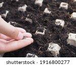 Vegetable Seeds On Hand's Woman ...