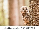 Stock photo tawny owl or strix aluco on the tree 191700731
