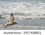 Young Seagull Flying Over Beach ...