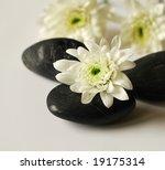 White Flower And Black Stone