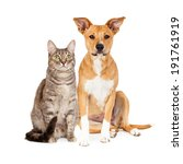 a cute yellow and white dog and ... | Shutterstock . vector #191761919