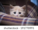 Stock photo scared kitten hiding at home 191770991