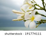 close up of plumeria or... | Shutterstock . vector #191774111