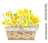Watercolor  Yellow Daffodils...