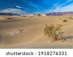 Sand Dune  Mesquite Sand Dunes  ...