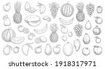 Sketch Fruits Isolated Vector...