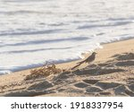 Bird On The Beach Next To...